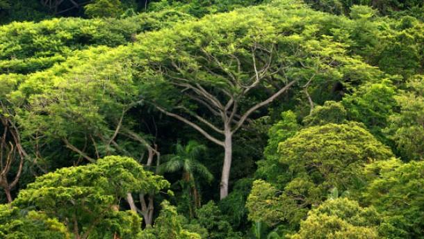 Regenwald Sao Paulo