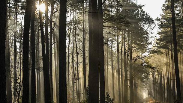 Lesen im Geschichtsbuch eines Waldes