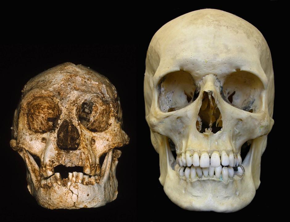 """Wirklich eine eigene Art? Homo floresiensis, der zwergenwüchsige """"Flores-Mensch"""" aus Asien."""