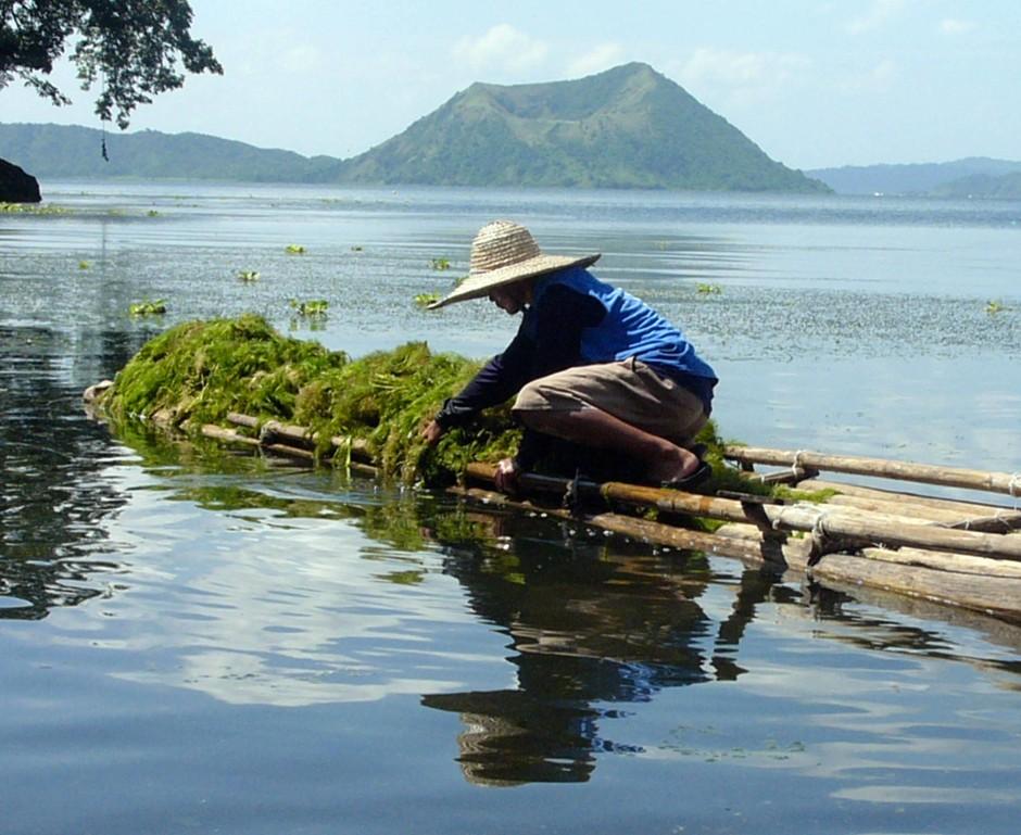 Seegrasernte auf den Philippinen