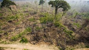 Am Amazonas wird der Klimaschutz ausgehöhlt