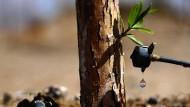 Im Nordwesten Chinas soll Tröpfchenbewässerung helfen, den Vormarsch der Wüsten zu stoppen. Die Technik wurde Ende der fünfziger Jahre in Israel entwickelt. Mittlerweile steht sie auch Hobbygärtnern zur Verfügung.