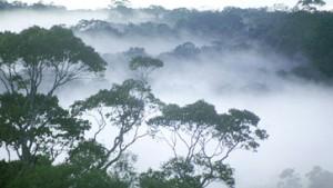 Galoppierende Urwaldvernichtung