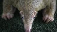 Corona-Brutstätten: Das Milliardengeschäft mit dem Wildtierhandel