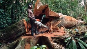 Die Weltrangliste der Urwaldsünder