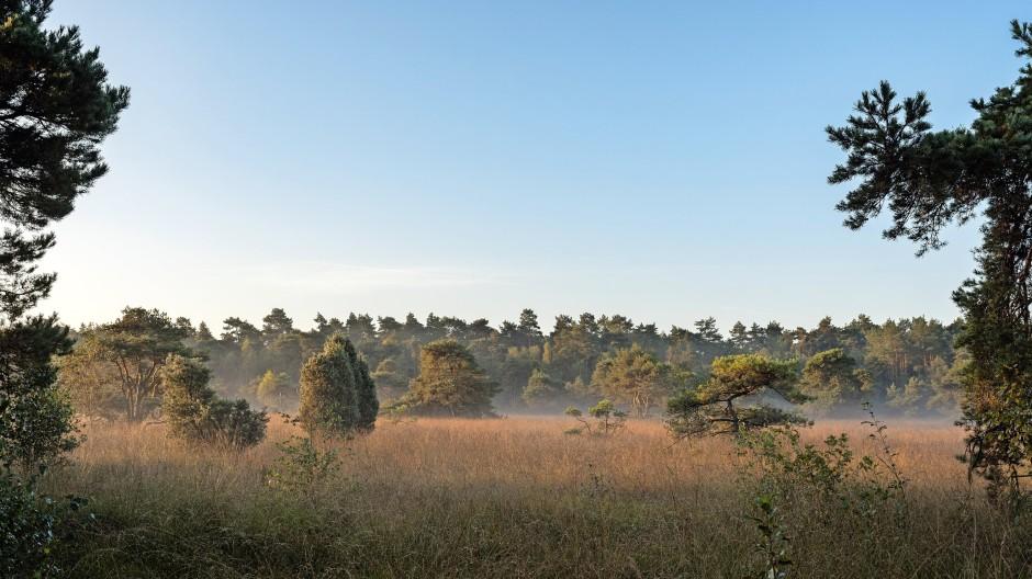Süskenbroksmoor, Münsterland, Naturerbe Borkenberge