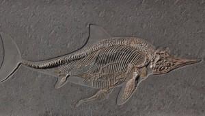 Das Rätsel der toten Urfische
