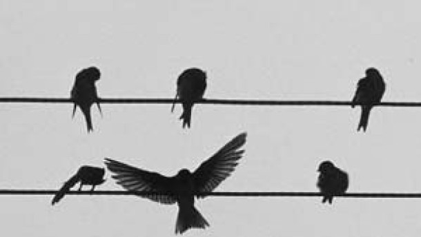 Zugvögel sprechen noch auf Restlicht an