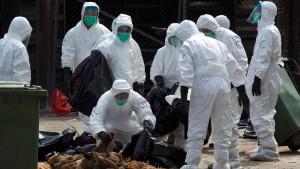 Vogelgrippe - die zweite Welle
