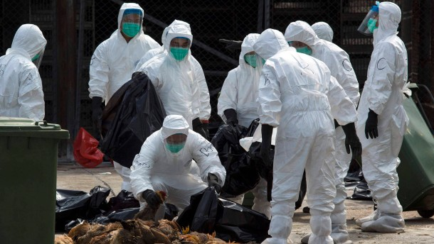 """Vogelgrippe - die """"zweite Welle"""""""