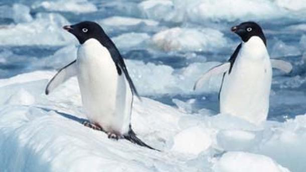 Driftender Eisberg bedroht Pinguine