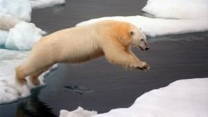 Gestrandete Eisbären gesichtet