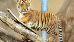 Leben und sterben lassen im Zoo