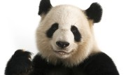 Aufbruch im Panda-Land