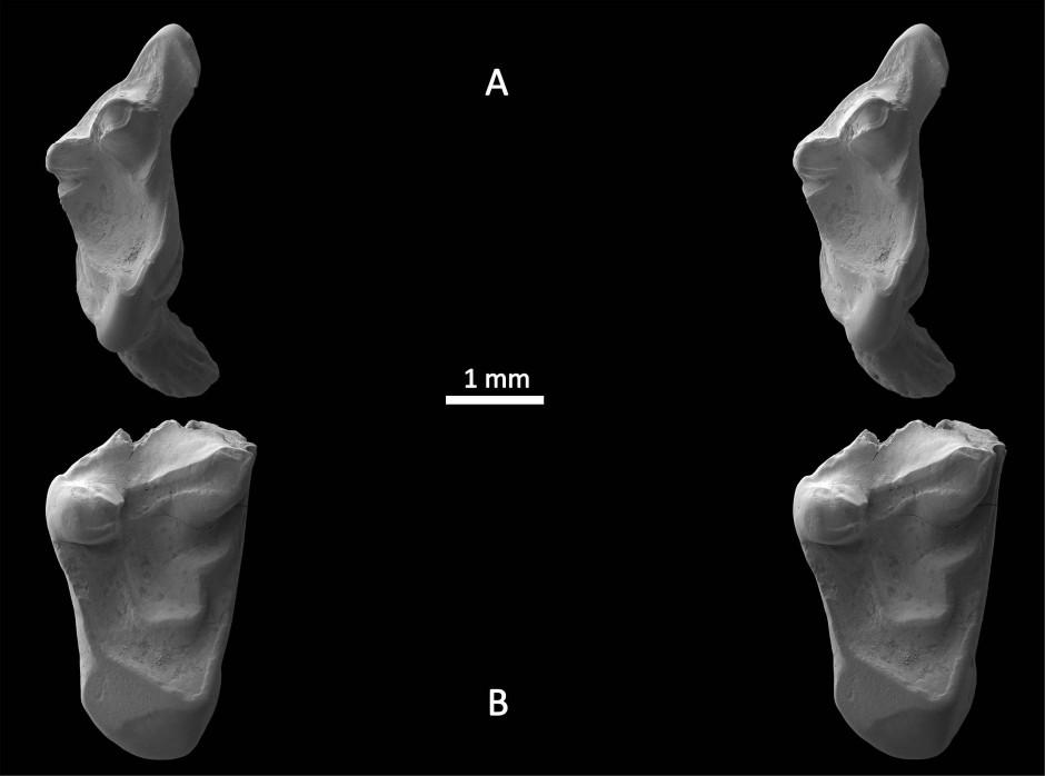 Die Zähne der Urratten