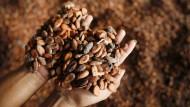 Getrocknete Kakaobohnen, die auf einer Plantage in Indonesien geerntet wurden.