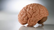 An Hirnstrukturen kann man Veranlagungen erkennen. Die menschliche Entwicklung wird aber nicht nur dadurch bestimmt.
