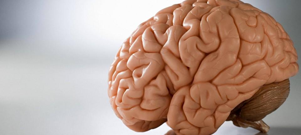 Hirnforschung: Wie entsteht Kunst im Gehirn? - Wissen - FAZ