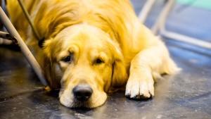 Dicke Hunde verhalten sich wie dicke Menschen