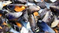 Das Elend der Muscheln