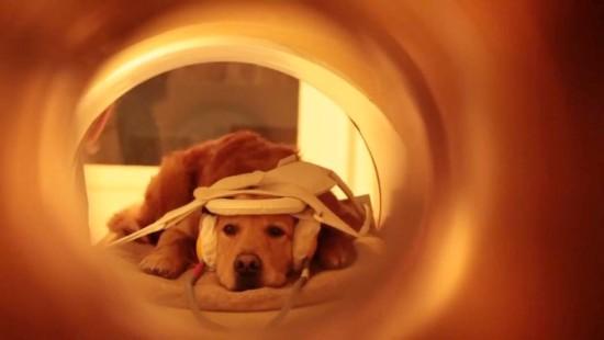 Sprachareale von Hunden im MRT untersucht