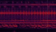 Spektrogrammvideo des Gesangs der Bayaka Pygmäen