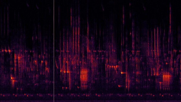 Spektrogrammvideo des Morgengesangs der Vögel in der Nähe des Tschernobyl Reaktors