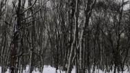 Klangkonzentrat eines Waldstückes in der Präfektur Fukushima in Japan.