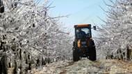 Frost bedroht die Apfelblüte - wenigstens diese Sorge sind die Obstbauern im Alten Land nun los.