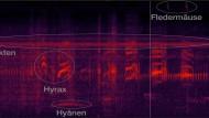 Frequenznischen in Afrika