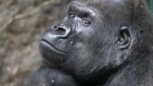 Primatianer