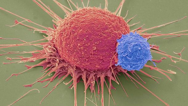 Hilfe zur Selbsthilfe im Kampf gegen den Krebs