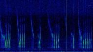 Spektrogrammvideo und Grafik eines unbekannten Fisches