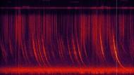 Spektrogrammvideo des Klangs eines äquatorialen Gewitters