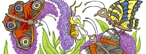 Der Schmetterlingsflieder – ein einzelner Strauch produziert Millionen von Samen.
