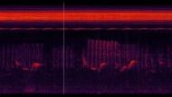 Spektrogrammvideo einer Tonaufnahme eines Waldes