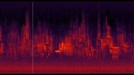 Spektrogrammvideos zweier Aufnahmen des Morgengesanges der Vögel