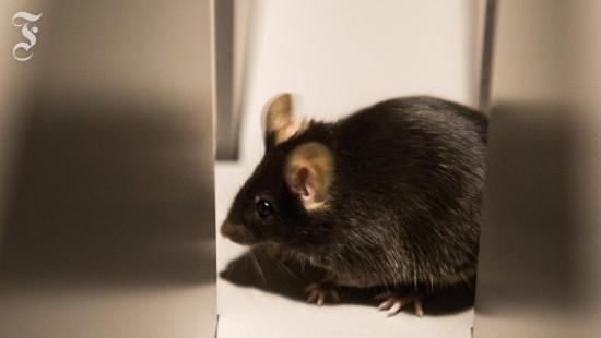 Was fühlt die Maus?