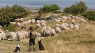 Ob Schafe hüten ein sinnvoller Auslandsaufenthalt ist, erscheint fraglich. Grundsätzlich ist ein Job oder ein Studium im Ausland jedem Studenten zu empfehlen.