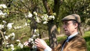 Missionar unter Apfelblüten