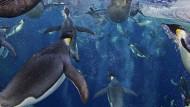 Größtes Meeresschutzgebiet der Welt geplant