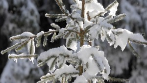 Winter als langes und teures Vergnügen