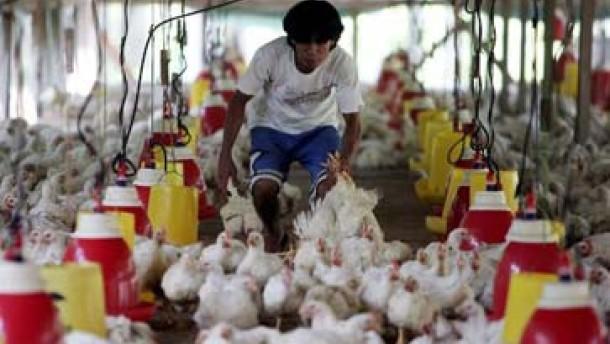 In Rumänien noch ein Fall von Vogelgrippe