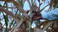 Millionen Menschen von Hungersnot bedroht