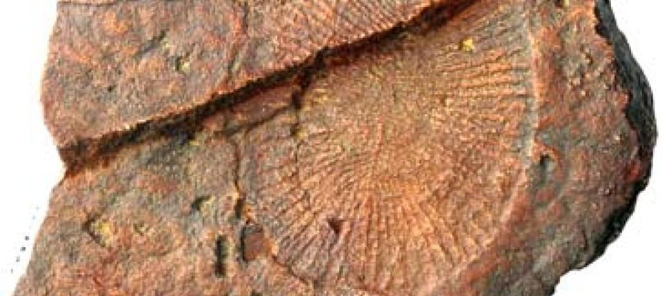 2 Arten von fossilen Datierungen