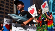 Proteste gegen japanische Delfinjagd