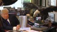 Begegnung von zwei schrägen Vögeln