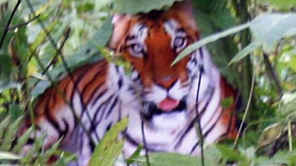 Fehlt nur noch der Tiger