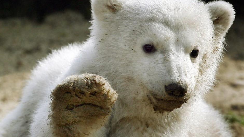 Knut als Medienstar, 2007