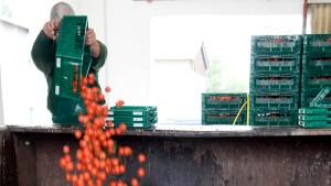 EU-Geld für Gemüseproduzenten
